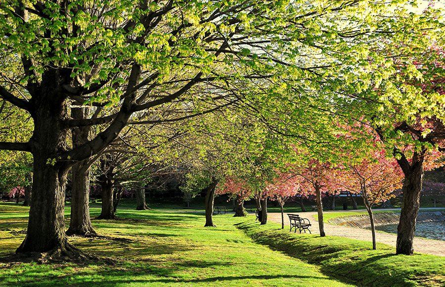 Harvard's Arboretum
