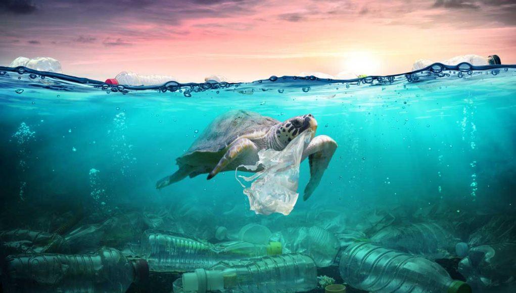 Wegmans reduce plastics